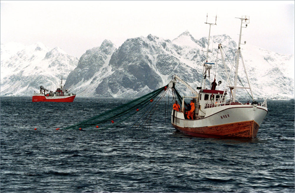 The world loves Norwegian codfish | The Independent ...