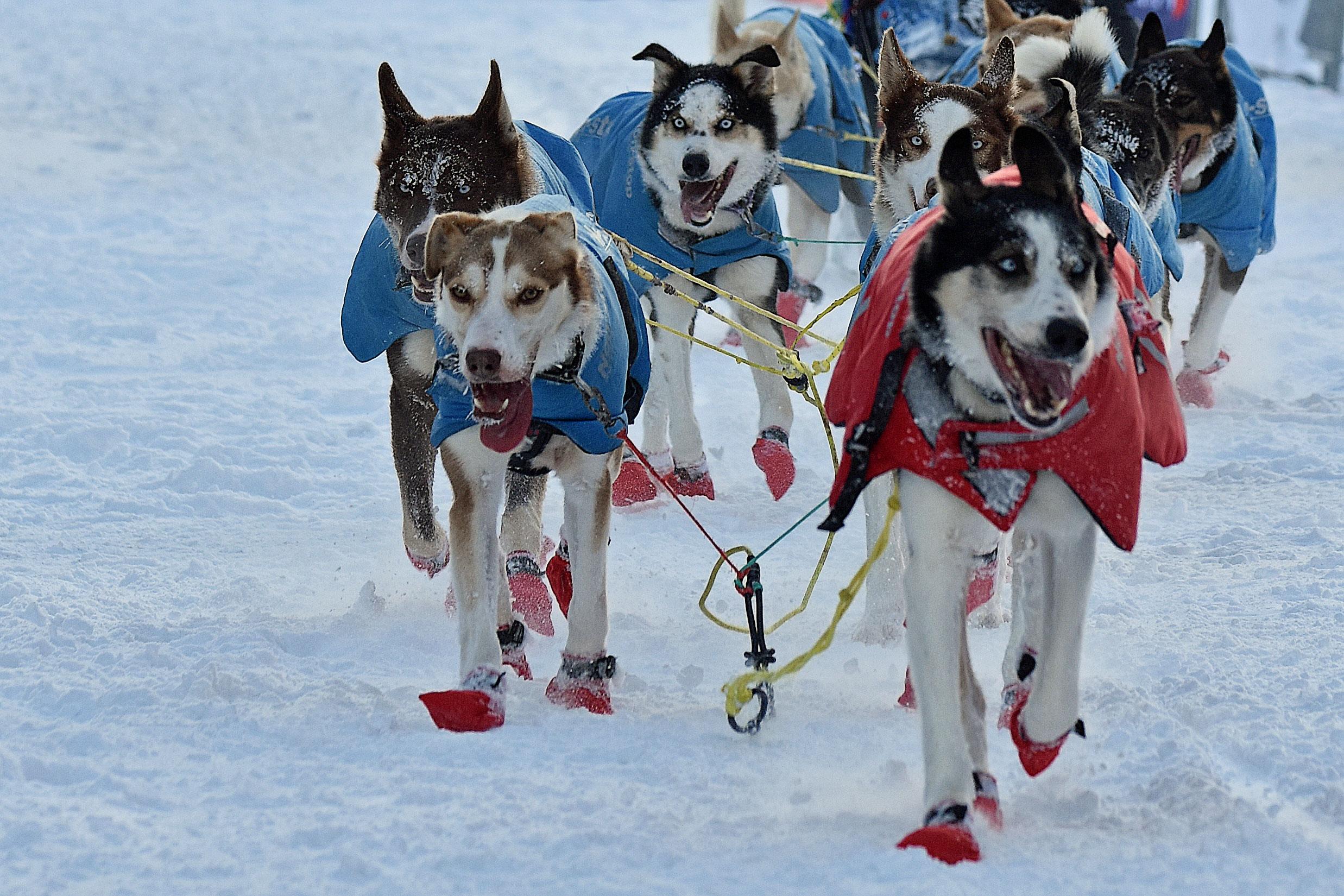 Europe's longest dogsled race traverses Finnmark | The