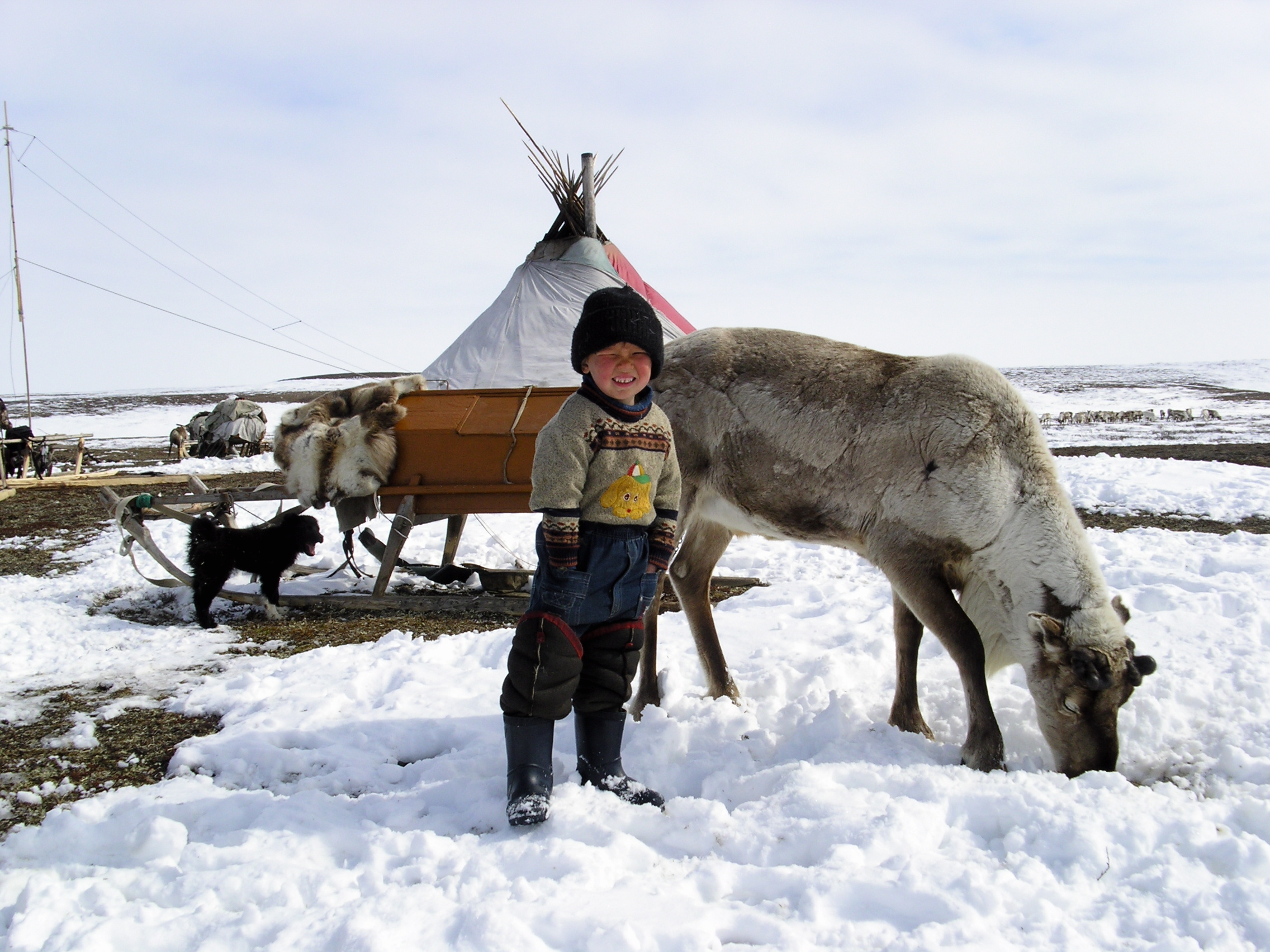 Petroleum scientists blame reindeer for mysterious tundra ...
