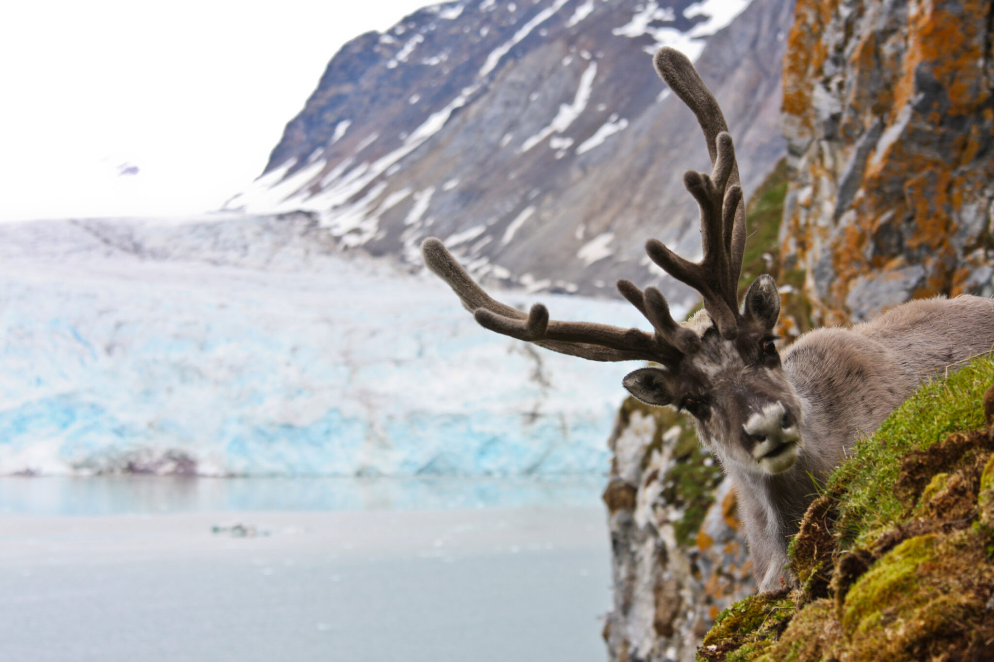 What can 40 years of reindeer monitoring data tell us?