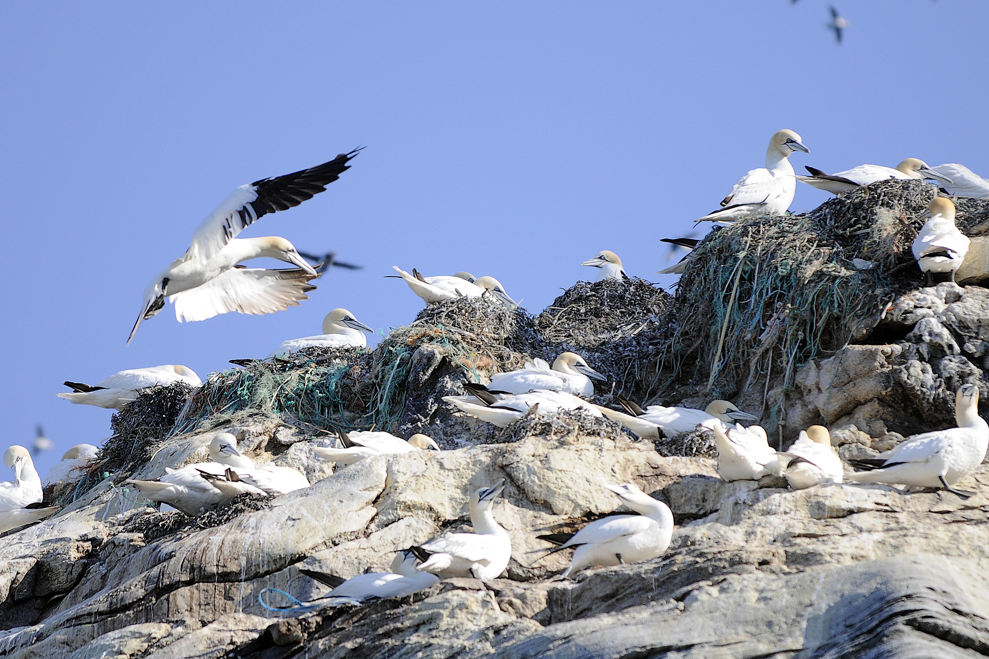 птахи арктики фото россии они