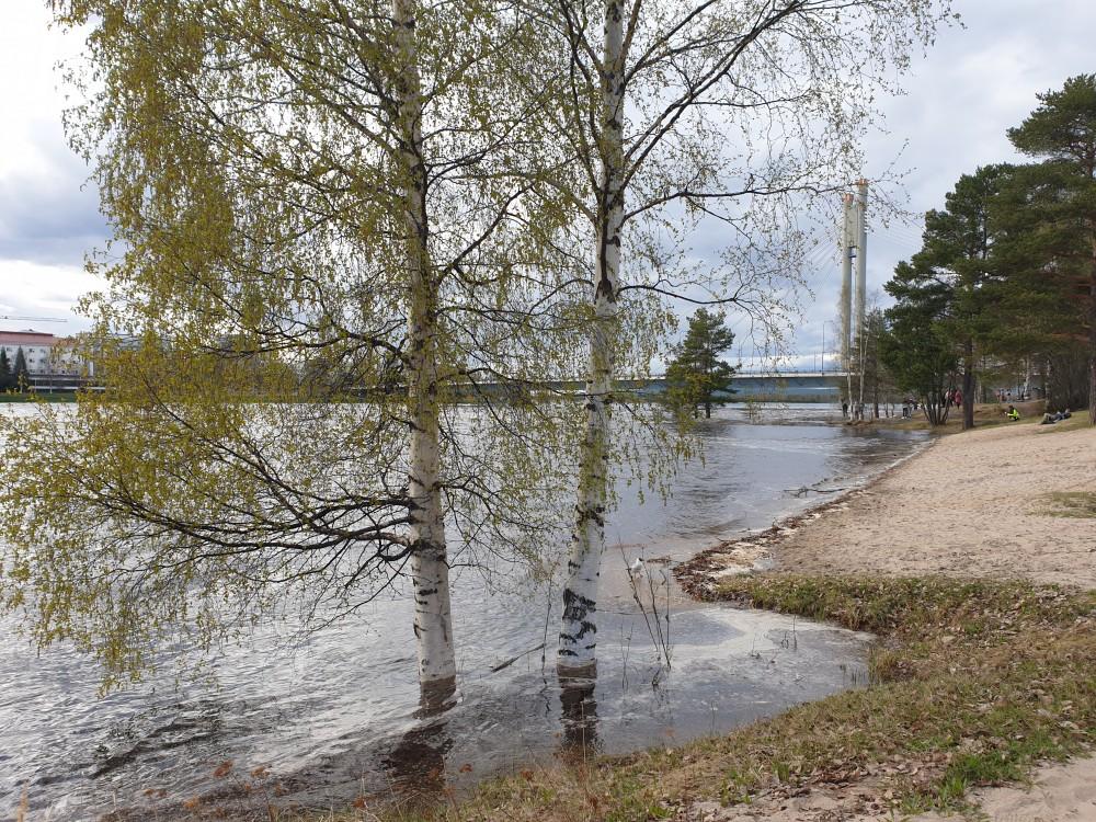 Lintula Rovaniemi