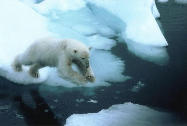 Sea ice loss a hallmark of 2016 Arctic Report Card